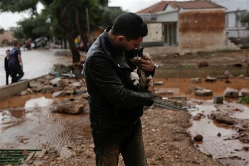 животные при наводнении