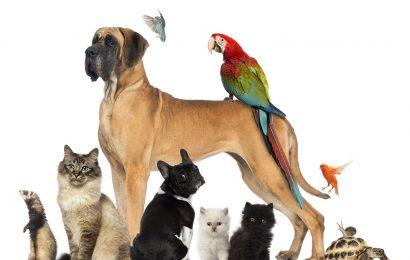 Изменение закона о содержании животных