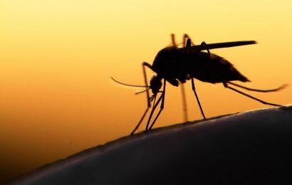 Вспышка малярии в Греции: Заразились уже 57 человек