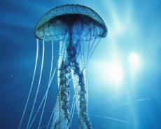 Появилась карта пляжей с медузами